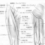 股関節の筋肉